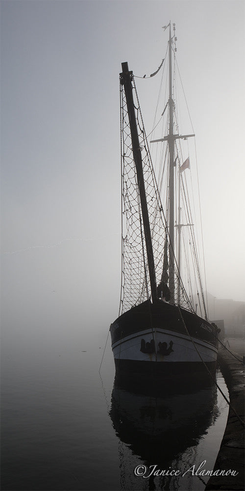 L253415pan Albatros in the Mist