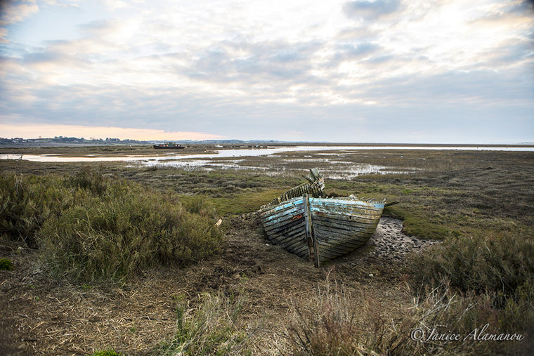 L473116 Reclaimed by Salt Marsh