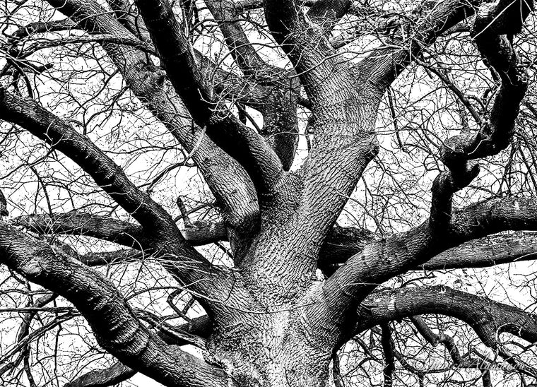 Tree 9 - Limited Edition Photograph printed on Fine Art Paper L545419