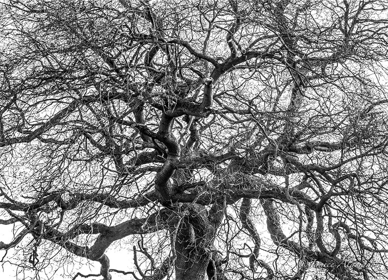 Tree 10 - Limited Edition Photograph printed on Fine Art Paper L546019