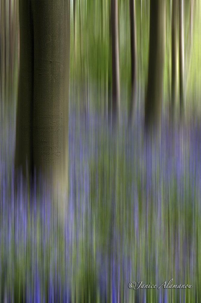 L625214b Essence of Norfolk - Bluebells