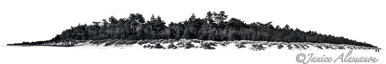 Pinewoods - Photograph printed on Fine Art Paper
