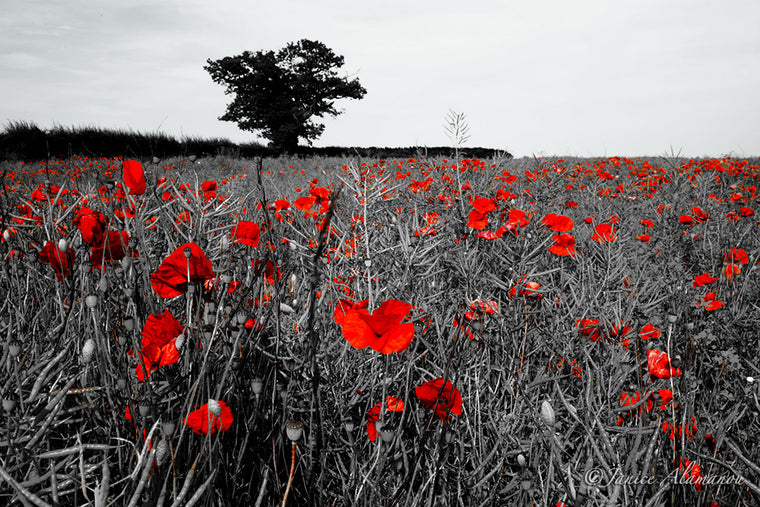 L744512 Field of Poppies