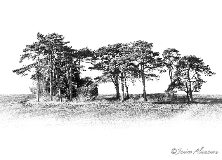 Trees 1 - Limited Edition Black and White Photograph L808219