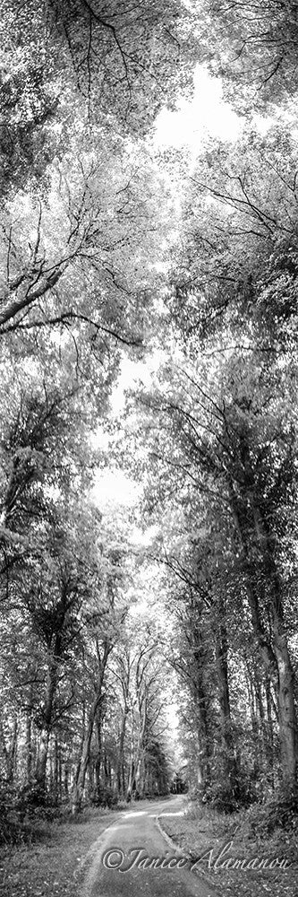 L816116pan Through the Trees