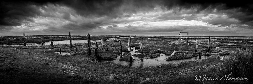 L828517pan On Salt Marsh