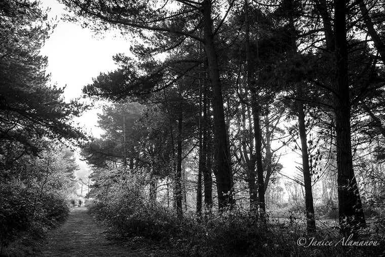 L984312 Walk in the Pines