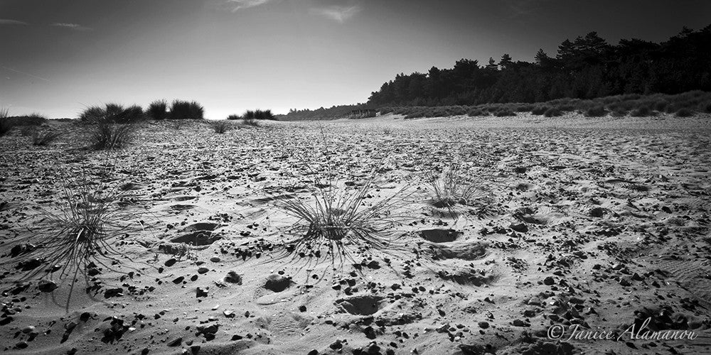 LBc701912bw Over the Sand
