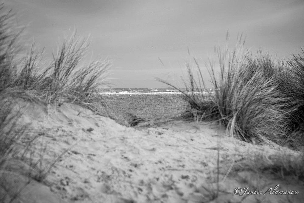 LBc958617bw Through the Dunes