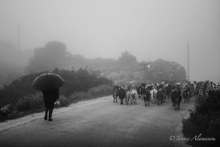 LGR973316 Shepherd in the Mist