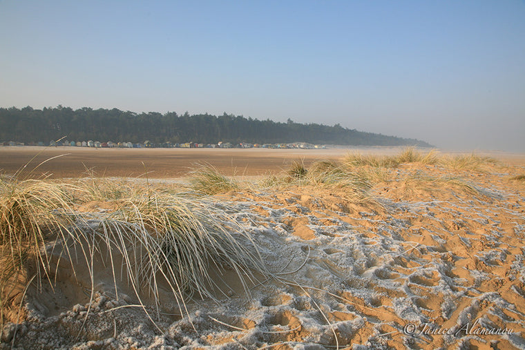 LSn36 Icy Marram
