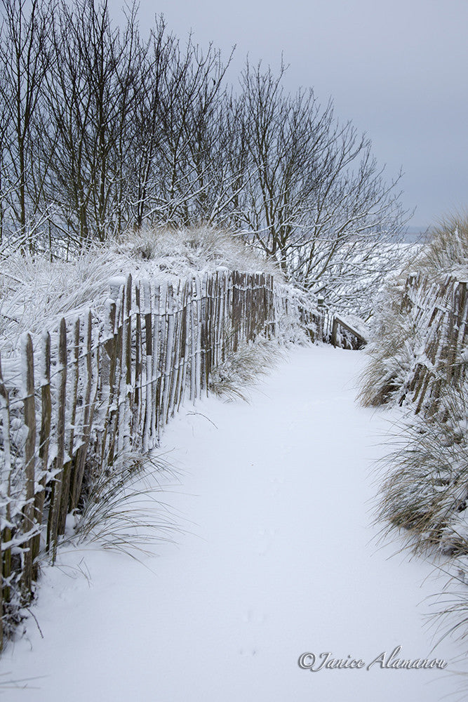 LSn762812 Snowy Beach Path