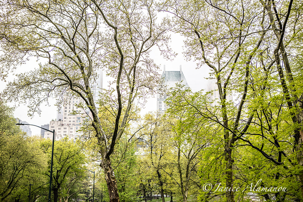 NY666019 Central Park - New York 2