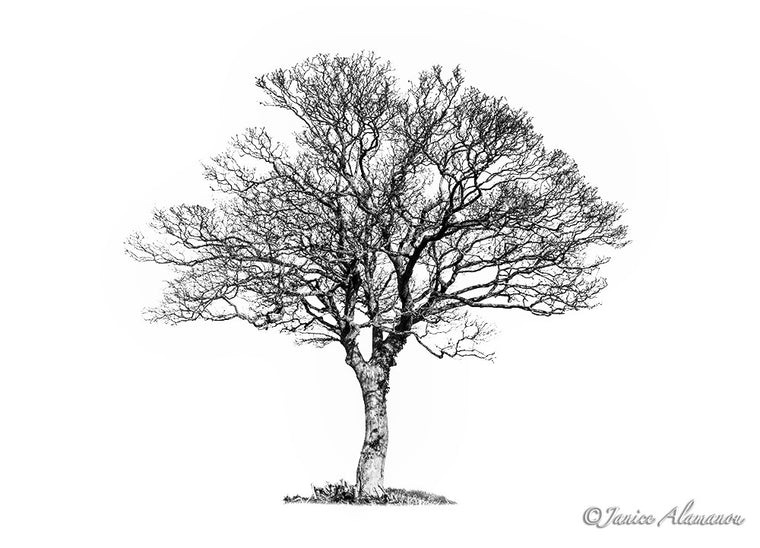 Tree 2 - Limited Edition Photograph printed on Fine Art Paper
