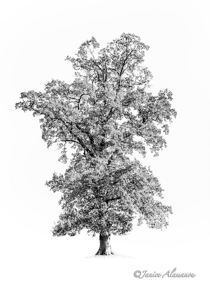 Tree 3 - Limited Edition Photograph printed on Fine Art Paper