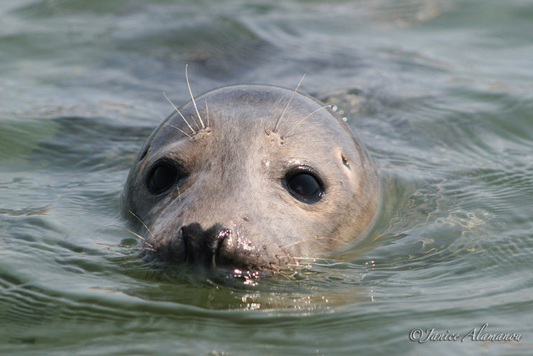 WA9 Common Seal