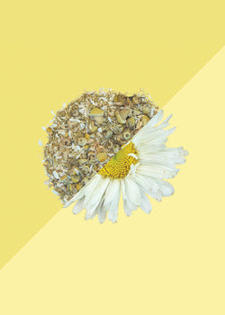 Tea Trunk Chamomile Flower Herb Tea, Tea, Tea Trunk, ihaat, [made_in_india], [handmade] - ihaat