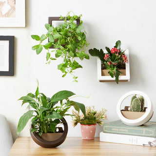 Flower Plant Pot Set - Wall & Desktop Planter Baskets