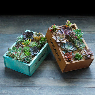 2pcs Natural Wooden Box Planter for Succulents