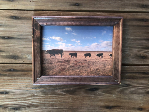 Bull and steers wooden framed farm photograph on canvas - Ok Yankee Girl
