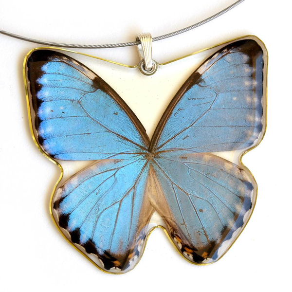 Blue Morpho Portis Whole Butterfly Pendant by Simona Dedek