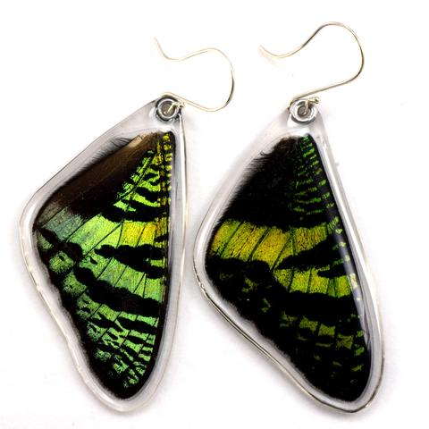Sunset Butterfly Earrings by Simona Dedek - © Blue Pomegranate Gallery