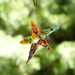 Colorburst Star Ornament by Riha