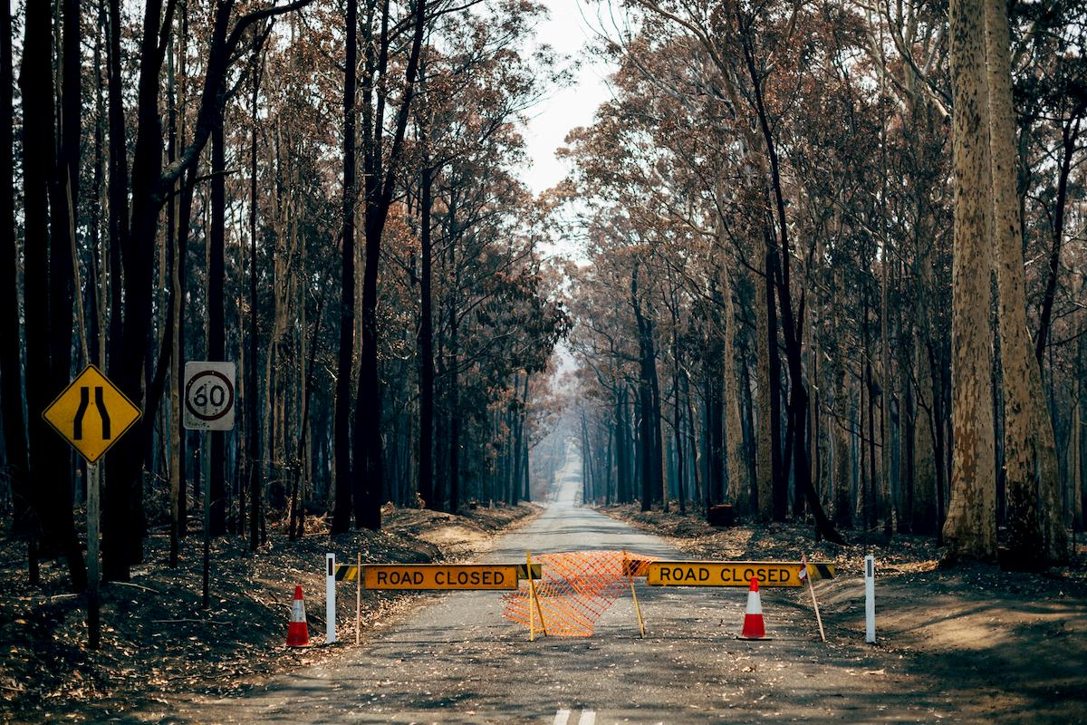 NSW forest, burnt out by the 2019/20 bushfires. Photo: Jarrah Lynch.