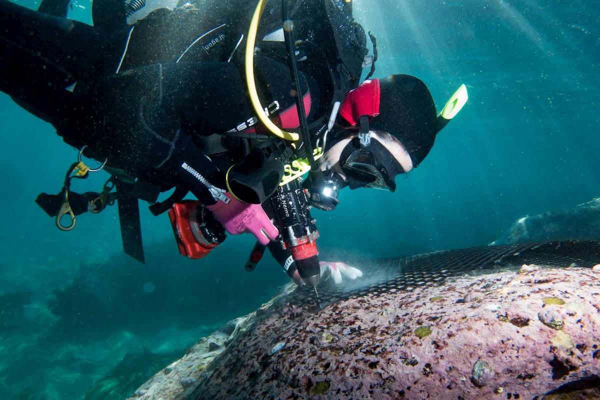 Affixing the temporary matting to reef, which is typically done at three metres depth. Photo: John Turnbull.