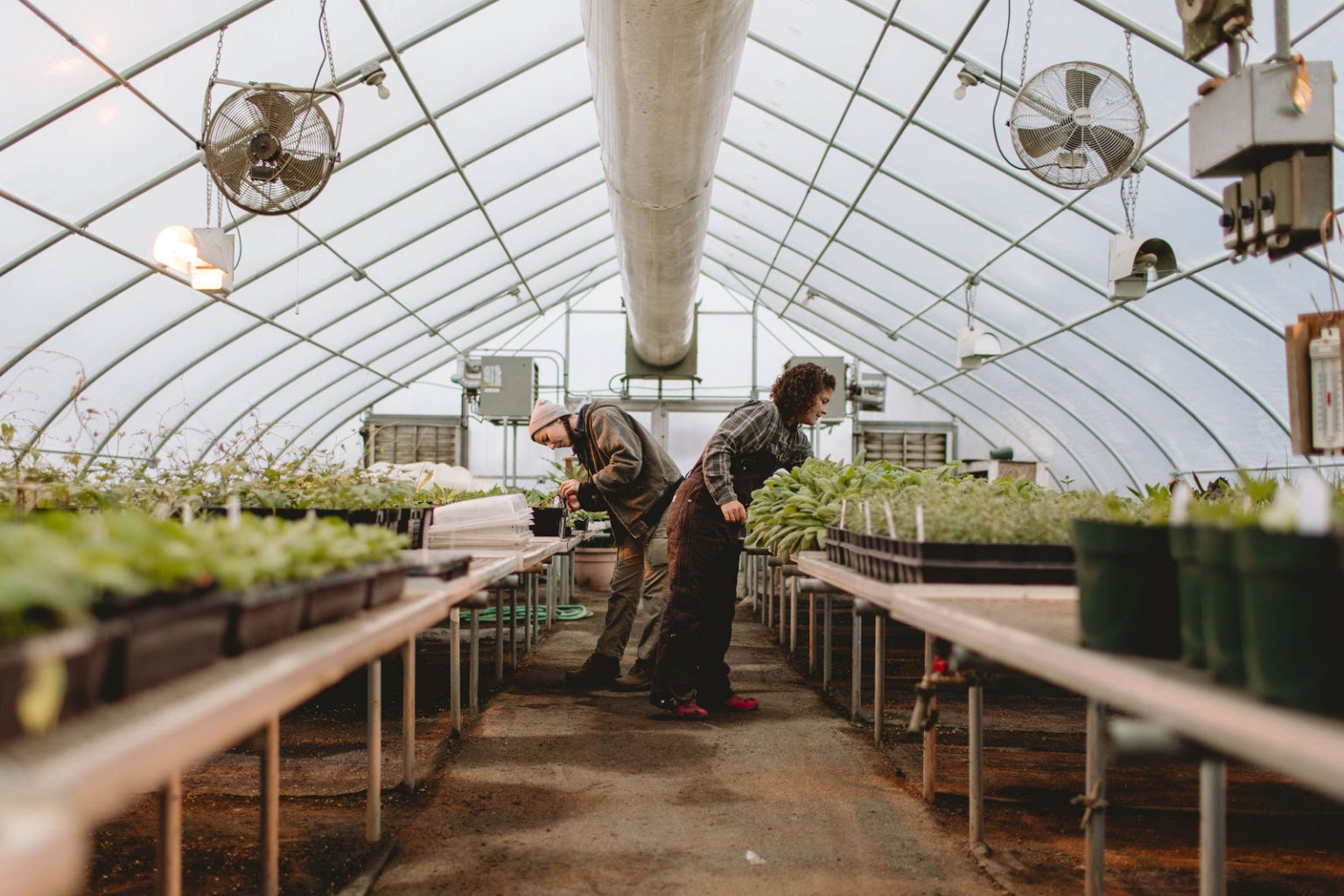 "We might not be able to get haircuts right now, but plants can. Rodale's interns prep more than 200 varieties of certified organic plant starts, which sometimes means giving them ""haircuts"" to promote leaf growth."