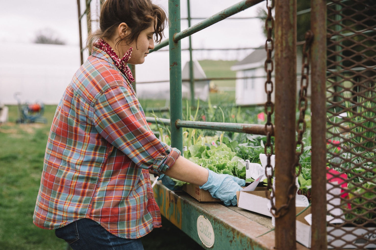 Rodale intern Bree Hersch gets her hands dirty during her daily chores around Rodale's main farm campus – kind of.