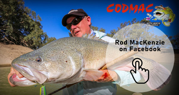Man holding large murray cod green fish on bright sunny day on a river