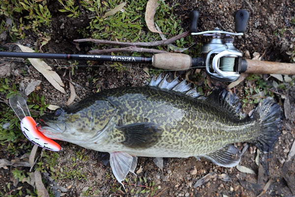 Murray Cod caught on Old Mate fishing Lure on the ground