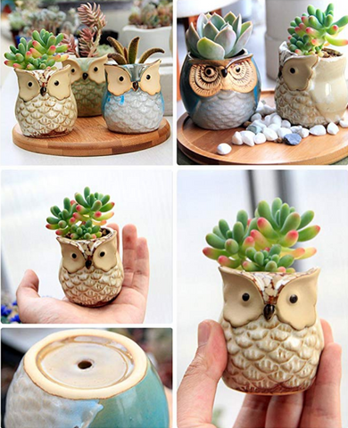 6 Pcs 2.5 Inches Owl Pots