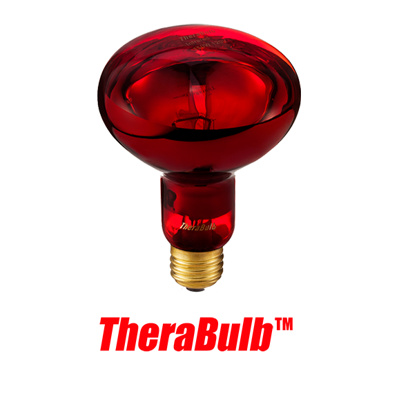 Near Infrared Silicone Coated Safety Bulb - Small Form 150 Watt (120V for North America)
