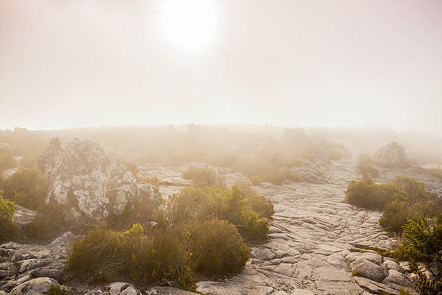 TABLE MOUNTAIN HAZE