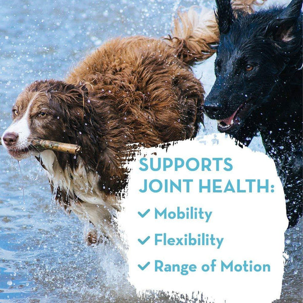 Joint Support for Pets info - Dr Mercola - 60 Tablets