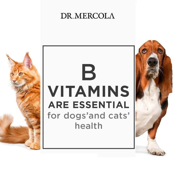 Vitamin B Complex for Pets | Dr Mercola | 24g - Oceans Alive Health