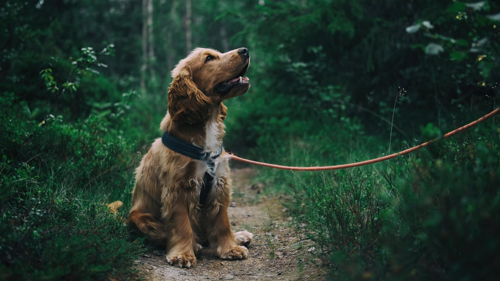 5 Reasons for supplementing salmon oil for your dog