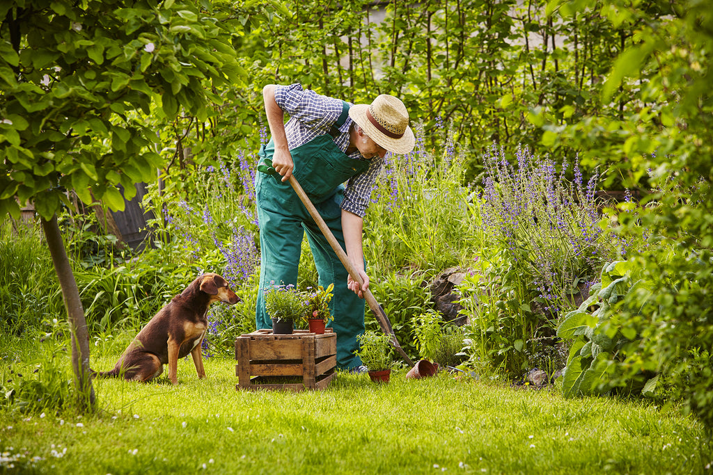 12 Healthy Herbs and Garden Plants for Dogs & Cats