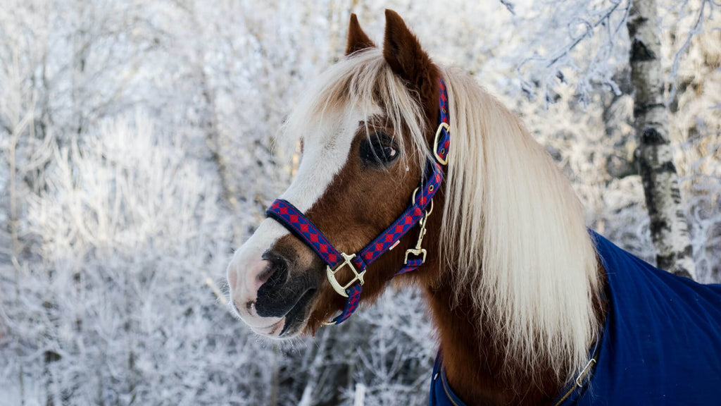 Pet Care Guide: Healthy Joints Make Healthy Horses in Winter