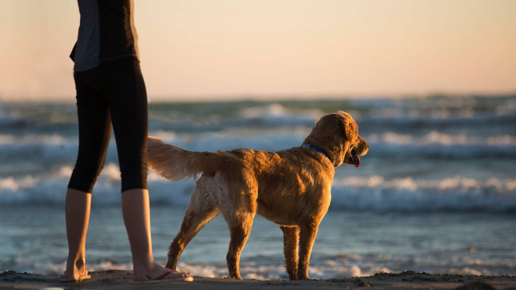 Tips to keep your dog safe and healthy in summer