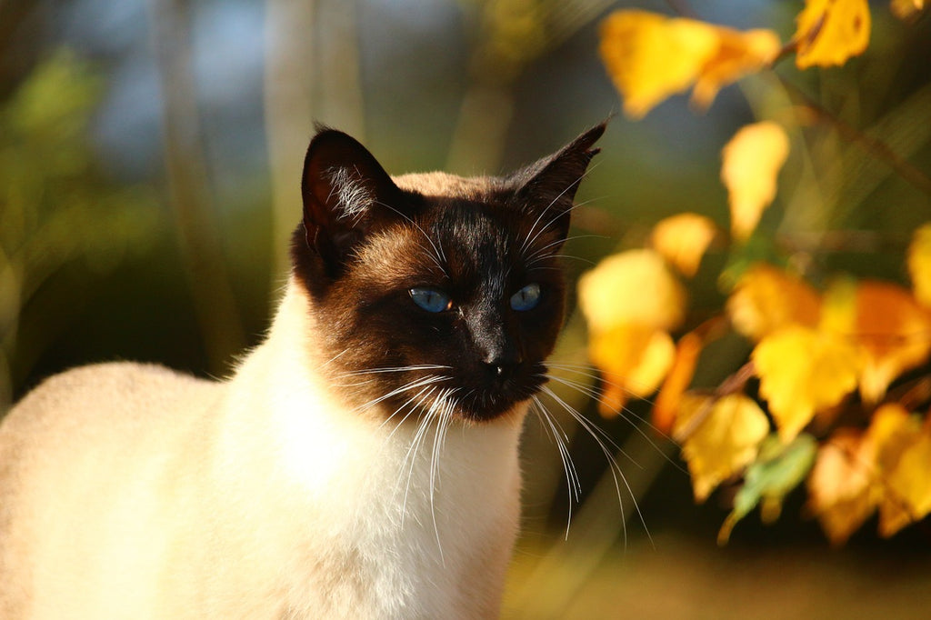 Tips for Cat Owners in Autumn
