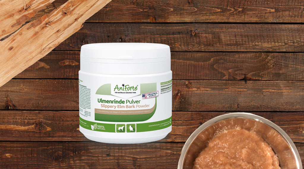 How to Use Slippery Elm Bark Powder