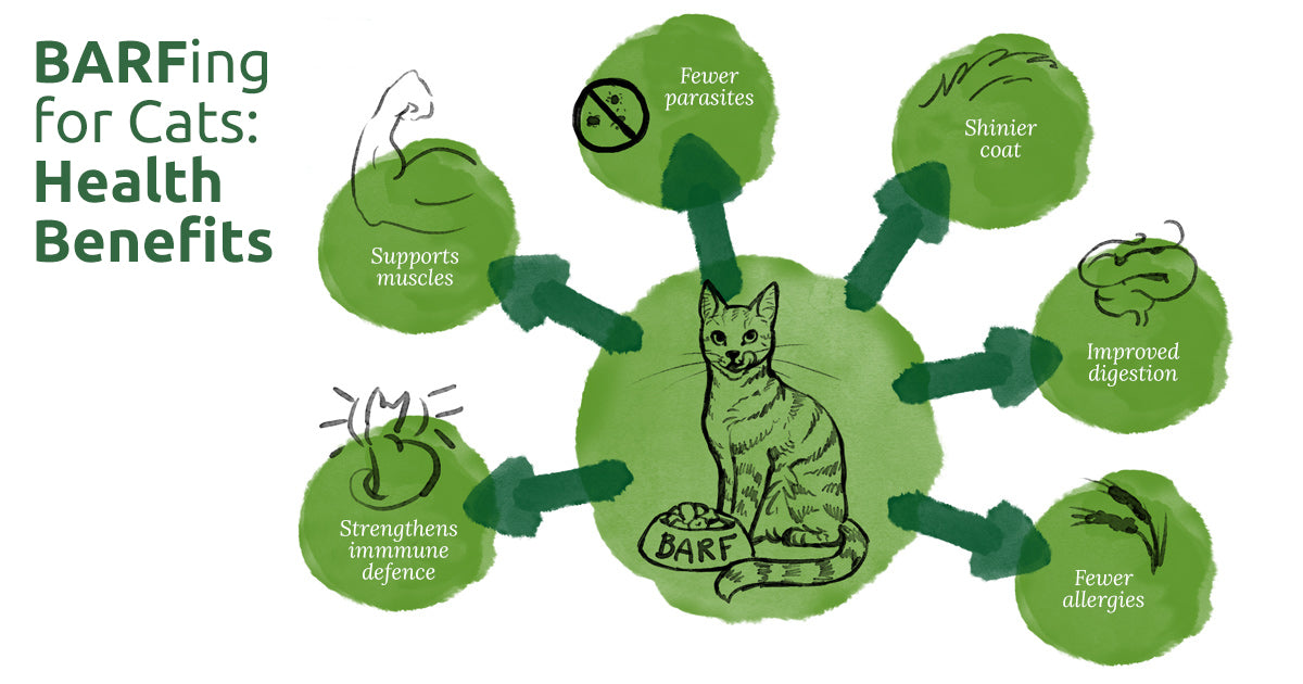 Barfing for cats: health benefits