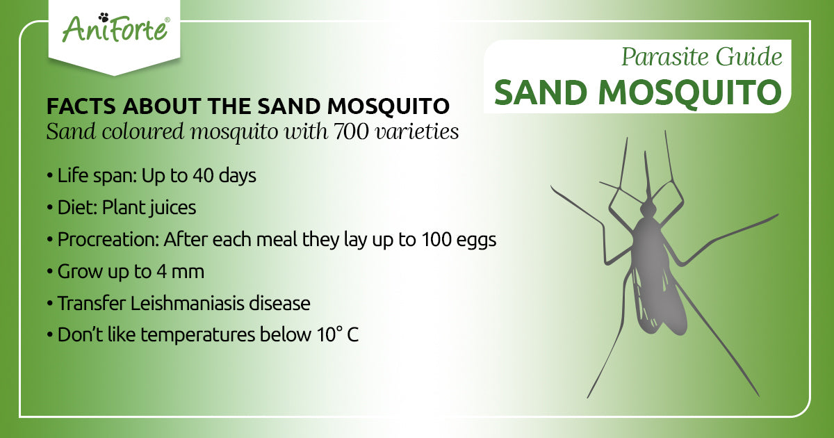 sand mosquitoes in pets
