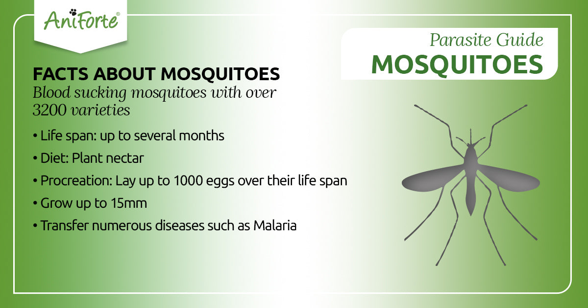 mosquitoes in pets