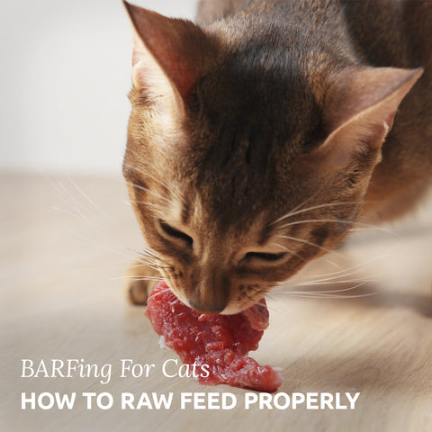BARFing for cats