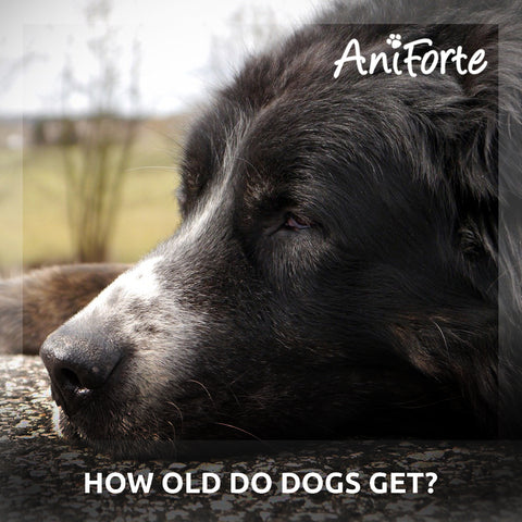 how old do dogs get