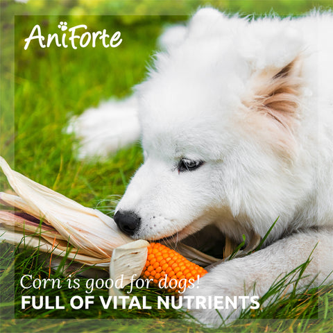 Is corn good for dogs
